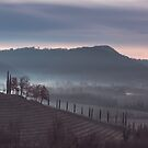 Cold misty morning in the vineyards of Italy by zakaz86