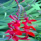 Red and Green should always be seen  by Merice  Ewart
