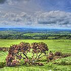 Dartmoor National Park Devon by Avril Harris