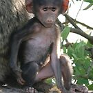 Baby Olive Baboon by CriscoPhotos