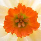 Daffodil by Brian Haslam