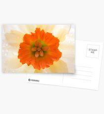 Daffodil Postcards