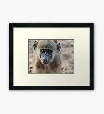 Vervet monkey portrait Framed Print