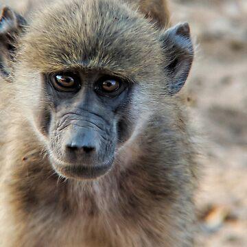 Vervet monkey portrait by 8kPzGZjJ20Rj