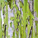 Bamboo Screen by hardhhhat