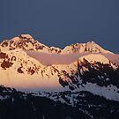 Pretty in Pink - Alaska by Barbara Burkhardt