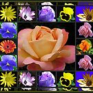 Summer Flowers Collage Featuring Rose by BlueMoonRose