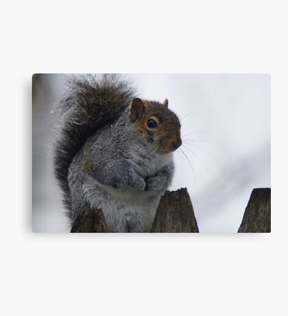 Oh So Cold Canvas Print