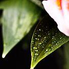 Painted Rain Series - Stargazer 3 by Sandra Wicklund
