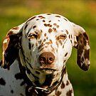 Farm Dog by Josie Eldred