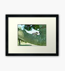 Surfing on a Branch 2 - Frogs in Florida Gerahmtes Wandbild