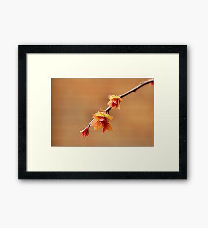 Twiggy Framed Print