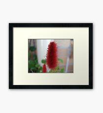 Red Macro Flower Framed Print