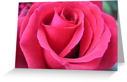 Intricate rose petals by hjaynefoster