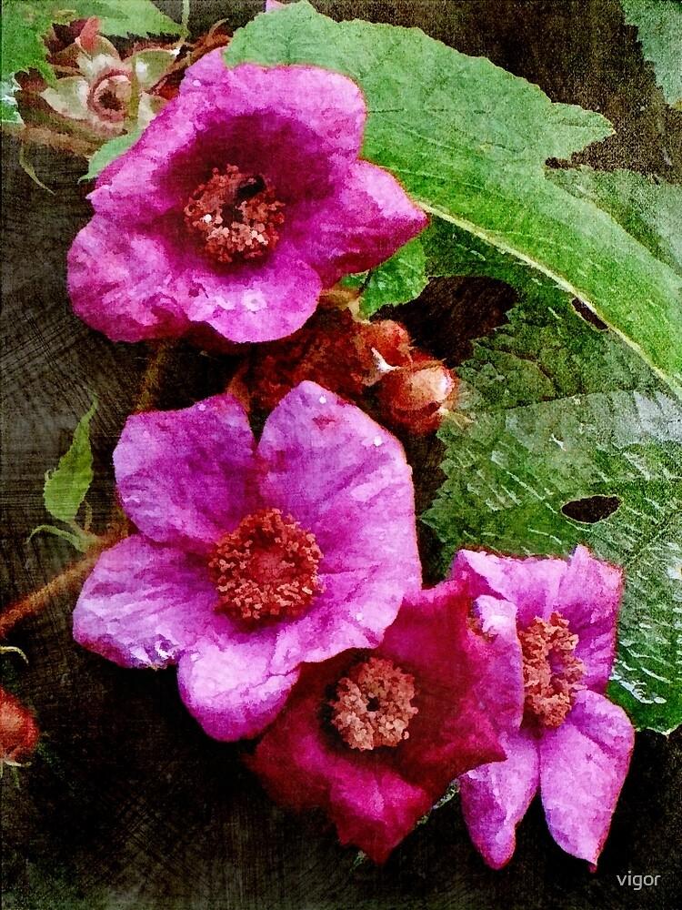 Wild Rose by vigor