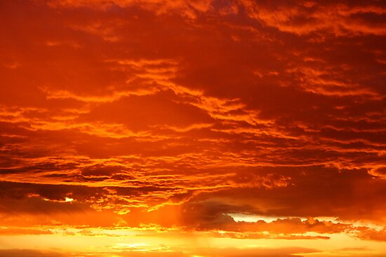 Nature's rush of orange by shazart