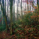 Linton Woods by Geoff Carpenter