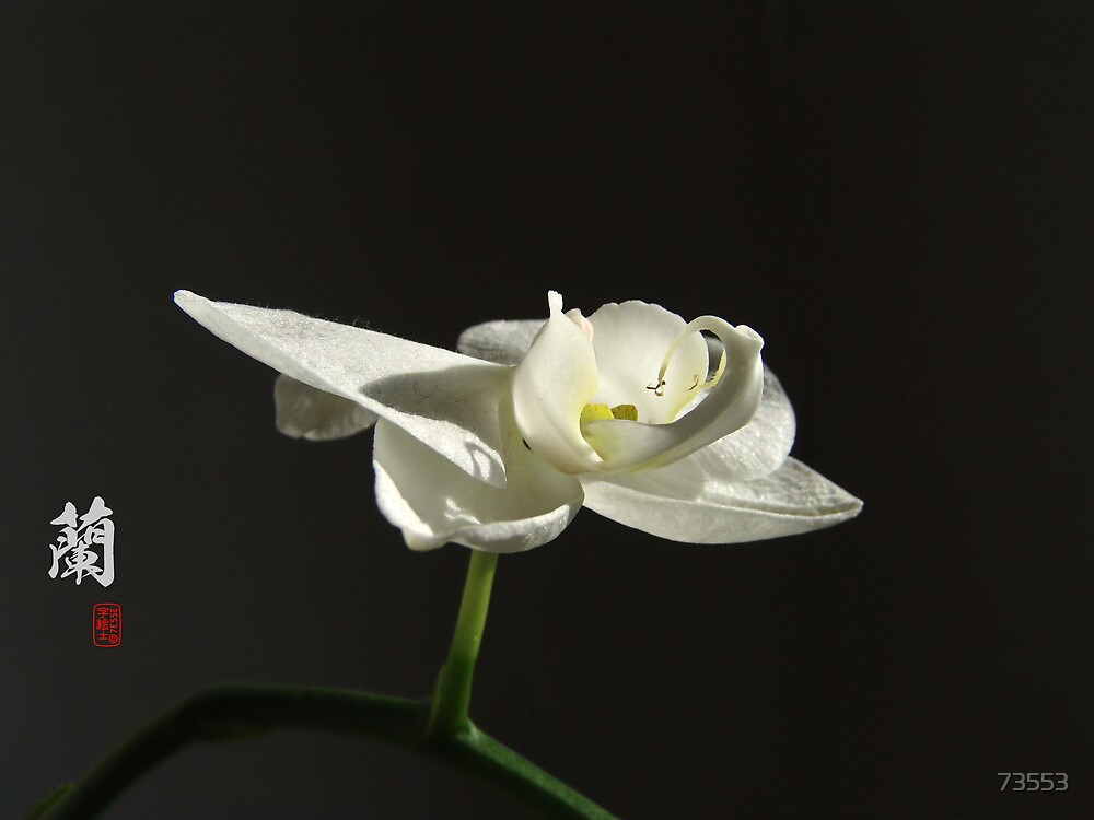 蘭 Orchid by 73553