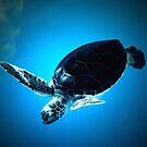 Flying turtle by mayette26