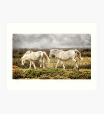 Camargue Horses Art Print