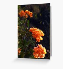 Exotic Orange Flowers Greeting Card