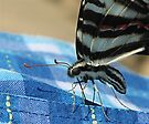 What Style, Swallowtail by NatureGreeting Cards ©ccwri
