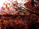 Into The Autumn Sun by NatureGreeting Cards ©ccwri