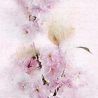 Blühende Kirschpastelle von Ann Garrett