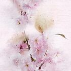 Flowering Cherry Pastels by Ann Garrett