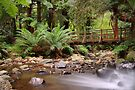 Badger Creek by Jim Worrall