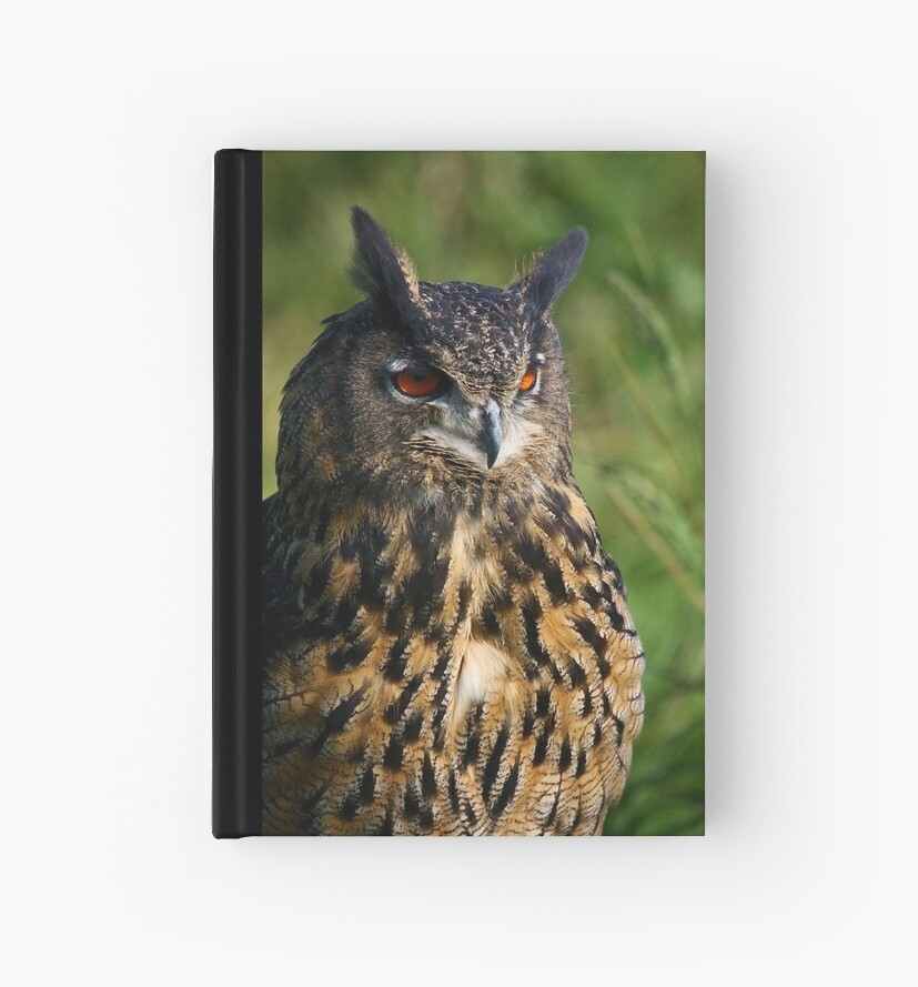 Portrait of a Eurasian Eagle Owl by Anne-Marie Bokslag