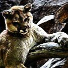 Cougar~Fractalius by shutterbug2010