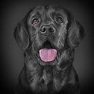 Drawing black Labrador  by bonidog