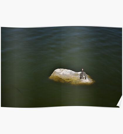 Lone Turtle Poster