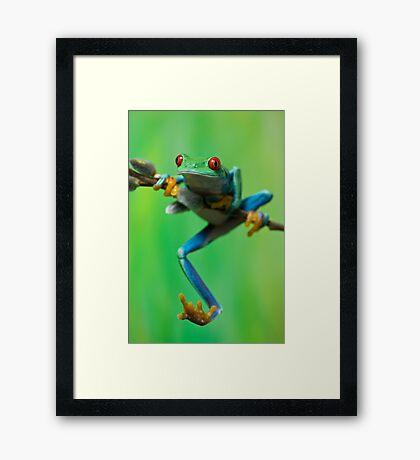 Caught climbing Framed Print
