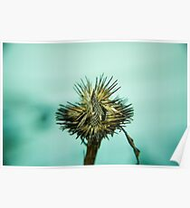 Cone Flower Seeds Poster