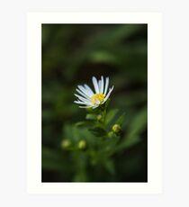 White and Yellow Flower Art Print