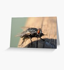 Macro of common house fly Greeting Card