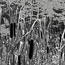 Cattails in the Painted Forest by Robert C Richmond