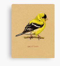 Gold Finch Bird Canvas Print