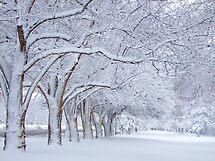 White Frosting by Thomas Stevens