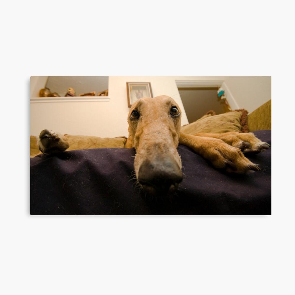 Greyhound Leinwanddruck