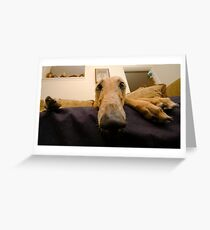 Greyhound Greeting Card