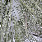 Icy Pine Needles by collageDP