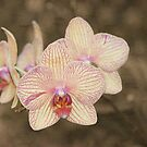Orchid Power by Misti Love