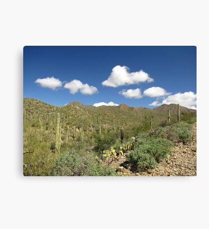 Sonoran Scenery Series ~ 6 ~ Canvas Print