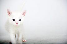 Little Itty Bitty Kitty..... by Susanne Correa