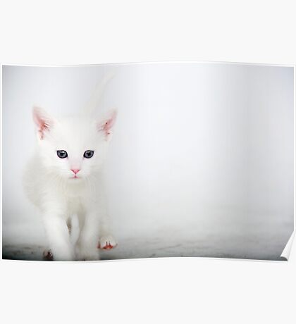Little Itty Bitty Kitty..... Poster