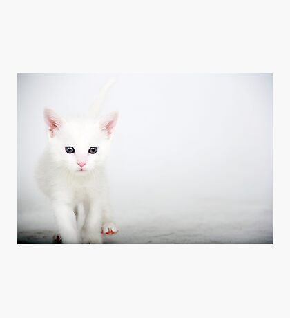 Little Itty Bitty Kitty..... Photographic Print
