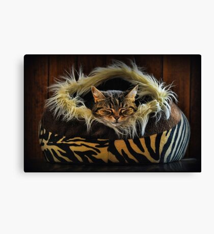 If you want to learn how to relax - study a cat! Canvas Print